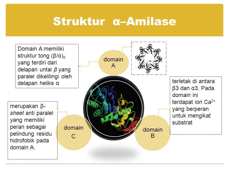 Struktur α–Amilase domain A domain B domain C Domain A memiliki struktur tong (β/α) 8 yang terdiri dari delapan untai β yang paralel dikelilingi oleh