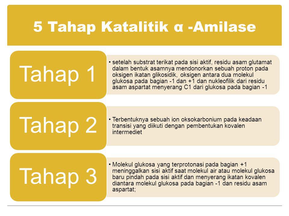 5 Tahap Katalitik α –Amilase (con't).