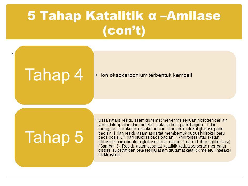 5 Tahap Katalitik α –Amilase (con't). Ion oksokarbonium terbentuk kembali Tahap 4 Basa katalis residu asam glutamat menerima sebuah hidrogen dari air