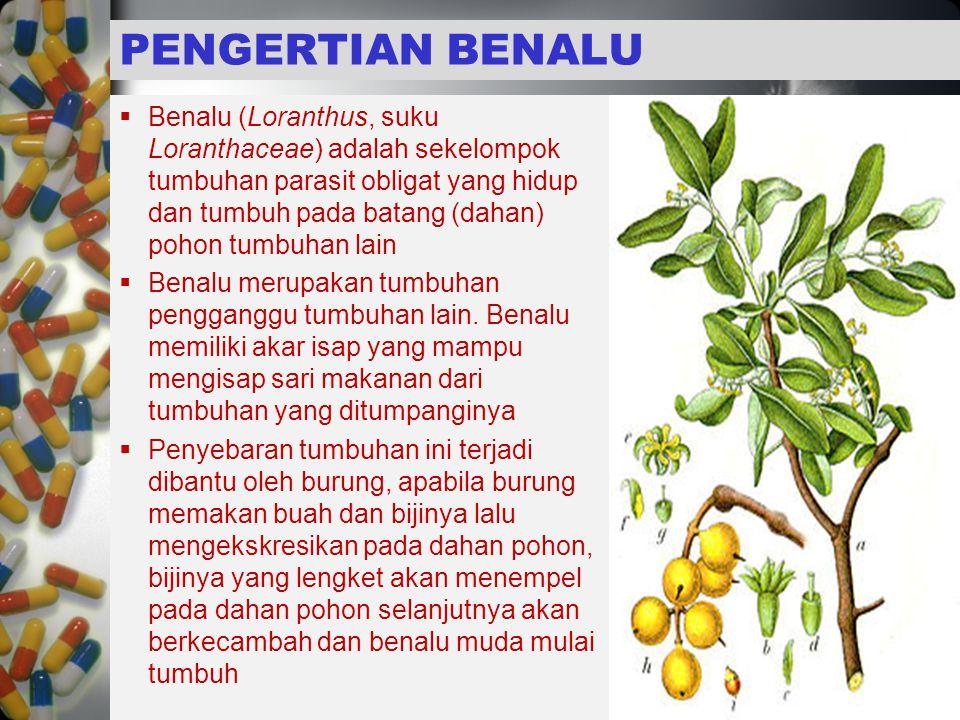  Benalu (Loranthus, suku Loranthaceae) adalah sekelompok tumbuhan parasit obligat yang hidup dan tumbuh pada batang (dahan) pohon tumbuhan lain  Benalu merupakan tumbuhan pengganggu tumbuhan lain.