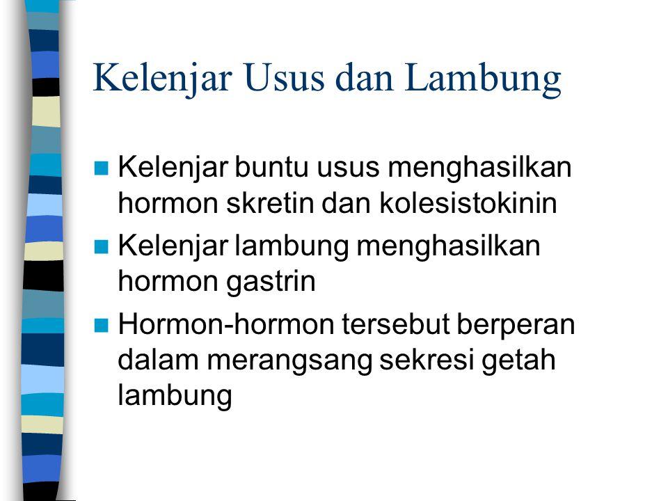 Kelenjar Usus dan Lambung Kelenjar buntu usus menghasilkan hormon skretin dan kolesistokinin Kelenjar lambung menghasilkan hormon gastrin Hormon-hormon tersebut berperan dalam merangsang sekresi getah lambung