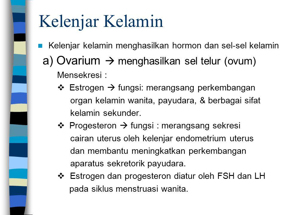 Kelenjar Kelamin Kelenjar kelamin menghasilkan hormon dan sel-sel kelamin a) Ovarium  menghasilkan sel telur (ovum) Mensekresi :   Estrogen  fungsi: merangsang perkembangan  organ kelamin wanita, payudara, & berbagai sifat  kelamin sekunder.