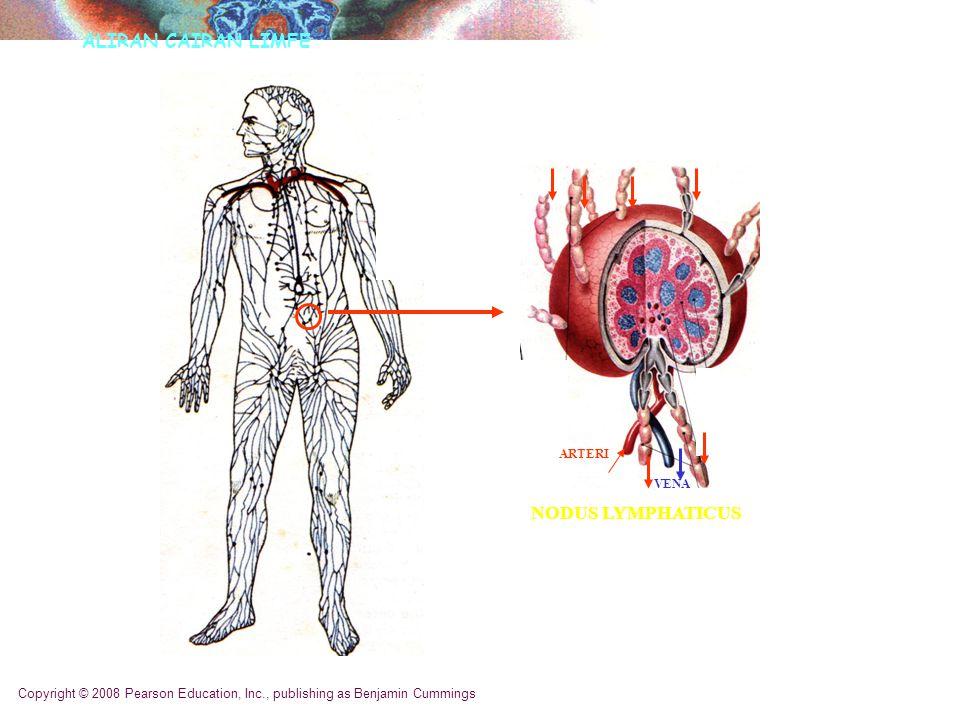 Copyright © 2008 Pearson Education, Inc., publishing as Benjamin Cummings 60% Narrowing of Coronary Artery