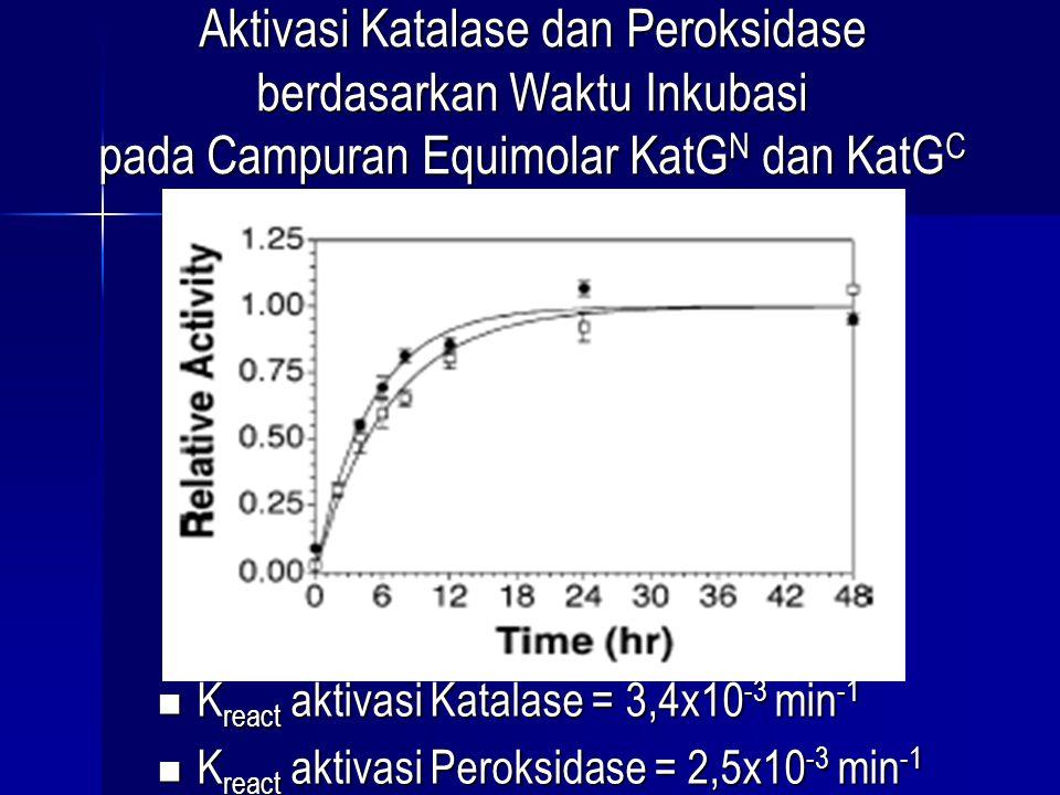 Aktivasi Katalase dan Peroksidase berdasarkan Waktu Inkubasi pada Campuran Equimolar KatG N dan KatG C K react aktivasi Katalase = 3,4x10 -3 min -1 K