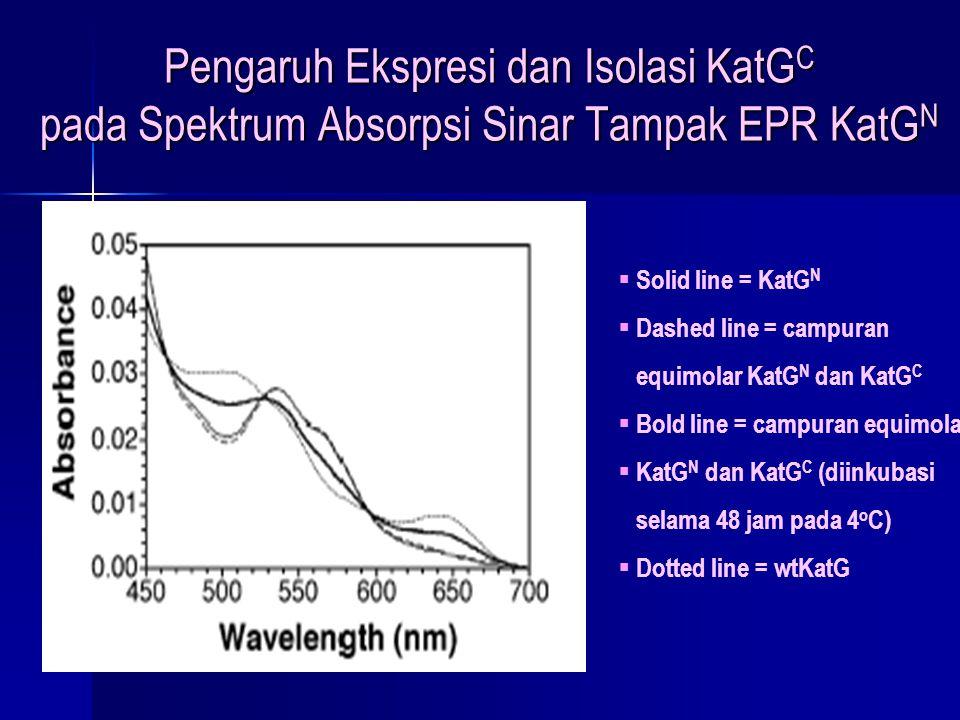 Pengaruh Ekspresi dan Isolasi KatG C pada Spektrum Absorpsi Sinar Tampak EPR KatG N  Solid line = KatG N  Dashed line = campuran equimolar KatG N da