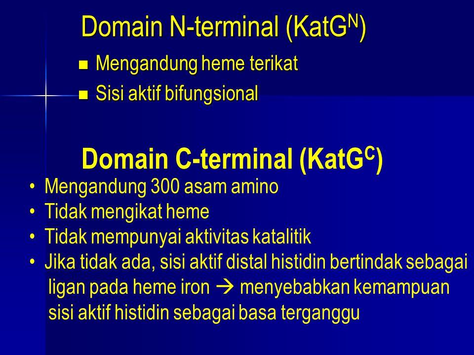Domain N-terminal (KatG N ) Mengandung heme terikat Mengandung heme terikat Sisi aktif bifungsional Sisi aktif bifungsional Domain C-terminal (KatG C