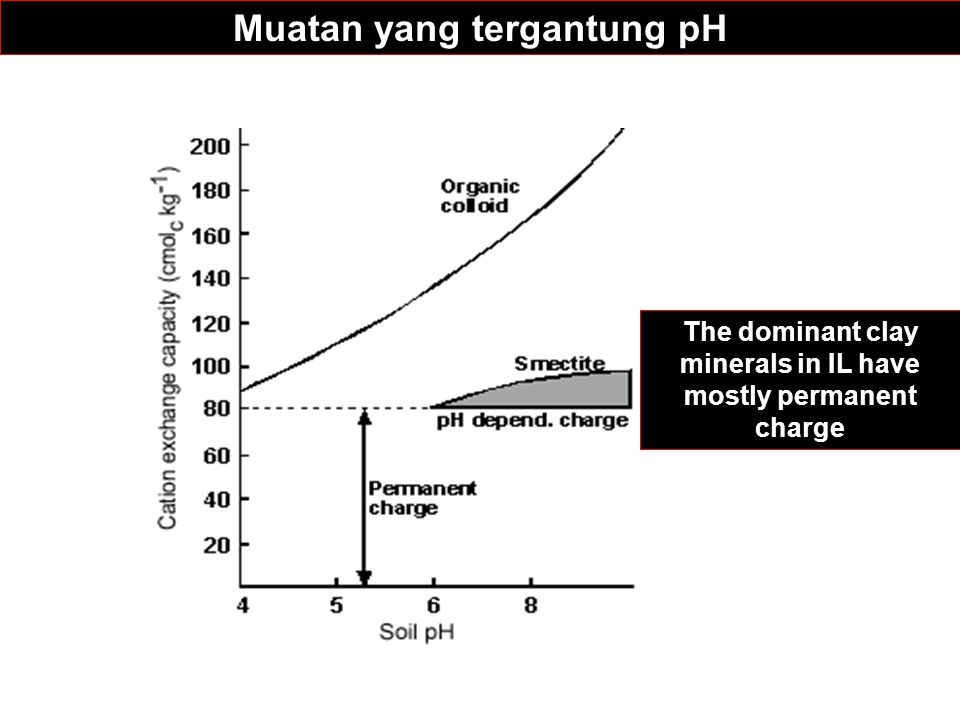 Muatan yang tergantung pH The dominant clay minerals in IL have mostly permanent charge