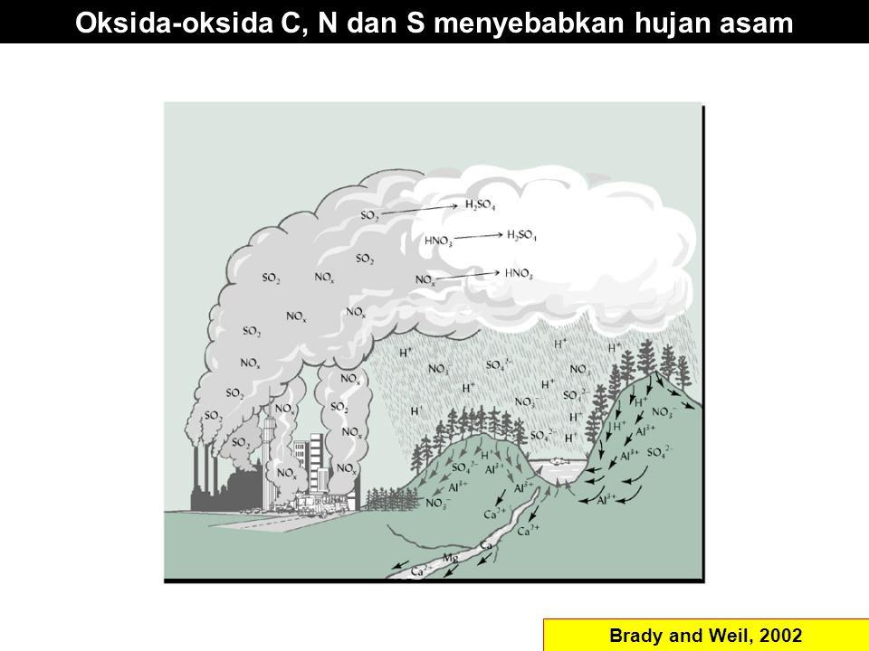 Oksida-oksida C, N dan S menyebabkan hujan asam Brady and Weil, 2002