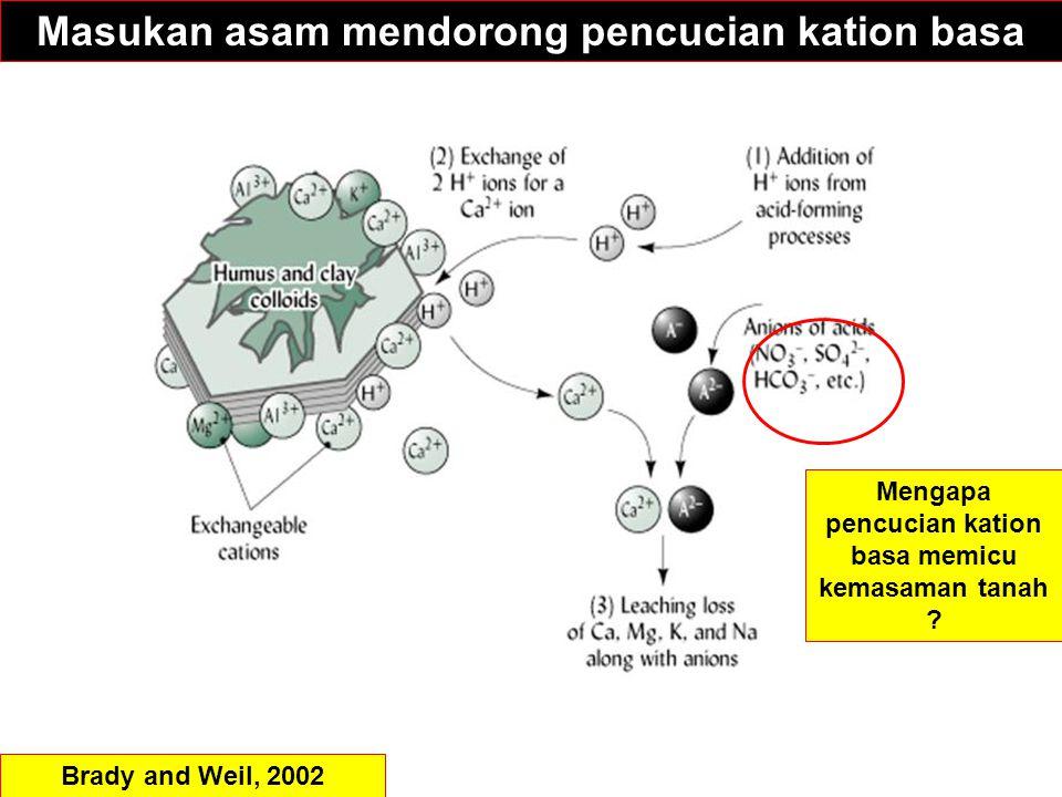 Masukan asam mendorong pencucian kation basa Brady and Weil, 2002 Mengapa pencucian kation basa memicu kemasaman tanah ?