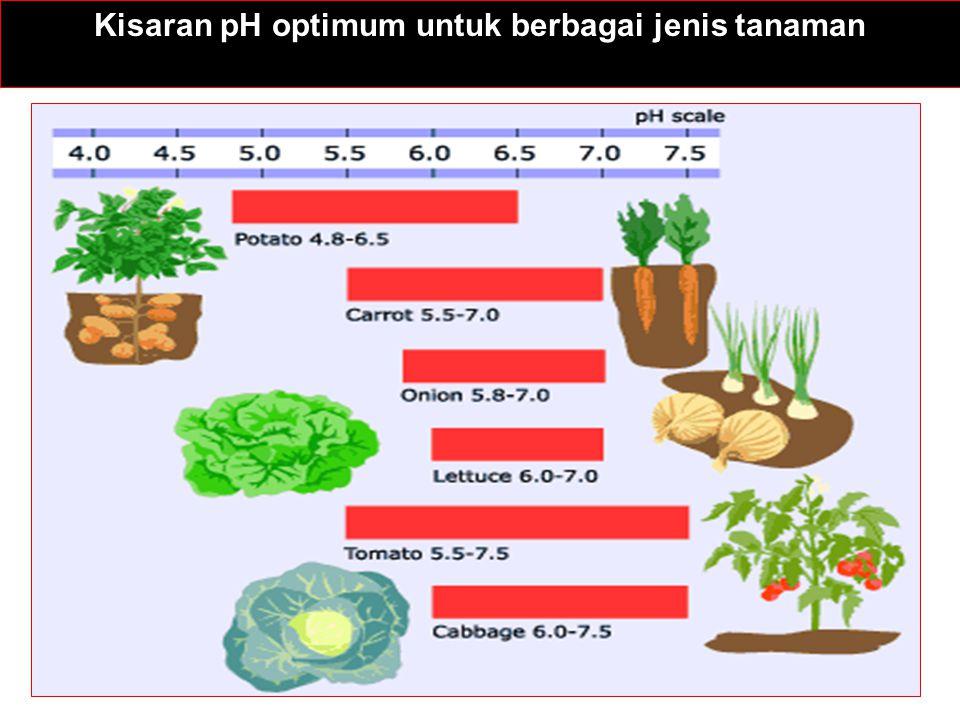 pH << 5.5pH >> 7.0 Toksisitas Al pada akar tanaman Fe deficiency Toksisitas Mn pada akar tanaman Mn deficiency Defisiensi Ca dan MgZn deficiency Defisiensi Mo pada legumes*Osmotic stress from salts P terikat kuat oleh Fe dan AlP tied up by Ca and Mg Transformasi N lambatPotato scab Permasalahan kesuburan tanah pada kondisi pH tanah yang ekstrim