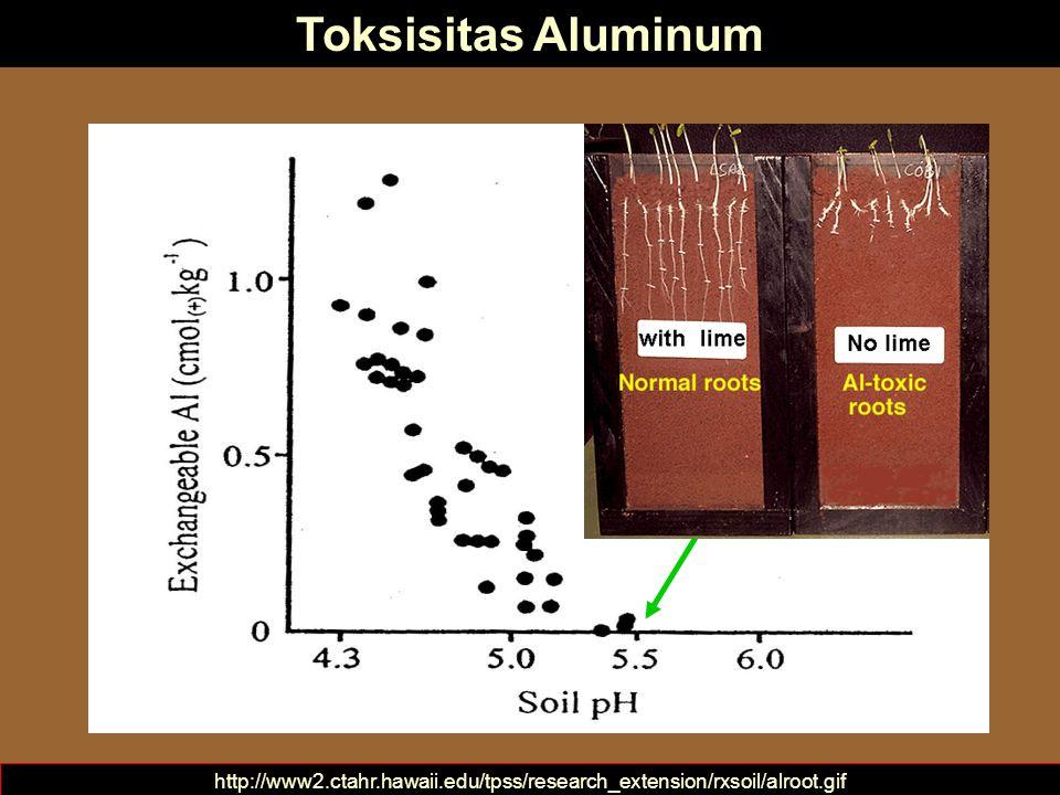 Bentuk-bentuk Kemasaman Tanah pH tanah mengukur kemasaman aktif Kemasaman Cadangan Kemasaman Aktif Brady and Weil, 2002