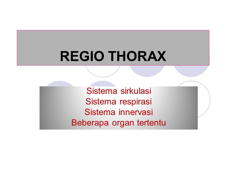 REGIO THORAX Sistema sirkulasi Sistema respirasi Sistema innervasi Beberapa organ tertentu