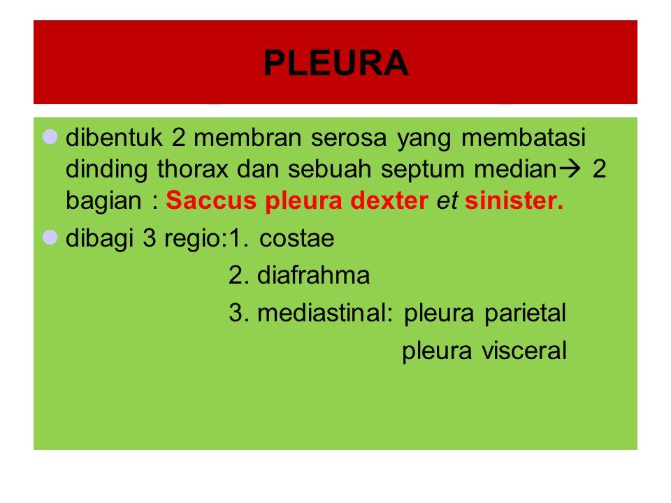 PLEURA dibentuk 2 membran serosa yang membatasi dinding thorax dan sebuah septum median  2 bagian : Saccus pleura dexter et sinister. dibagi 3 regio:
