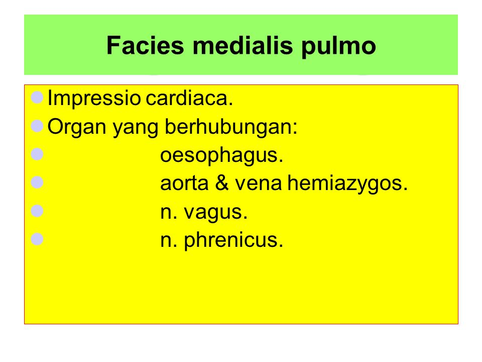 Facies medialis pulmo Impressio cardiaca. Organ yang berhubungan: oesophagus. aorta & vena hemiazygos. n. vagus. n. phrenicus.