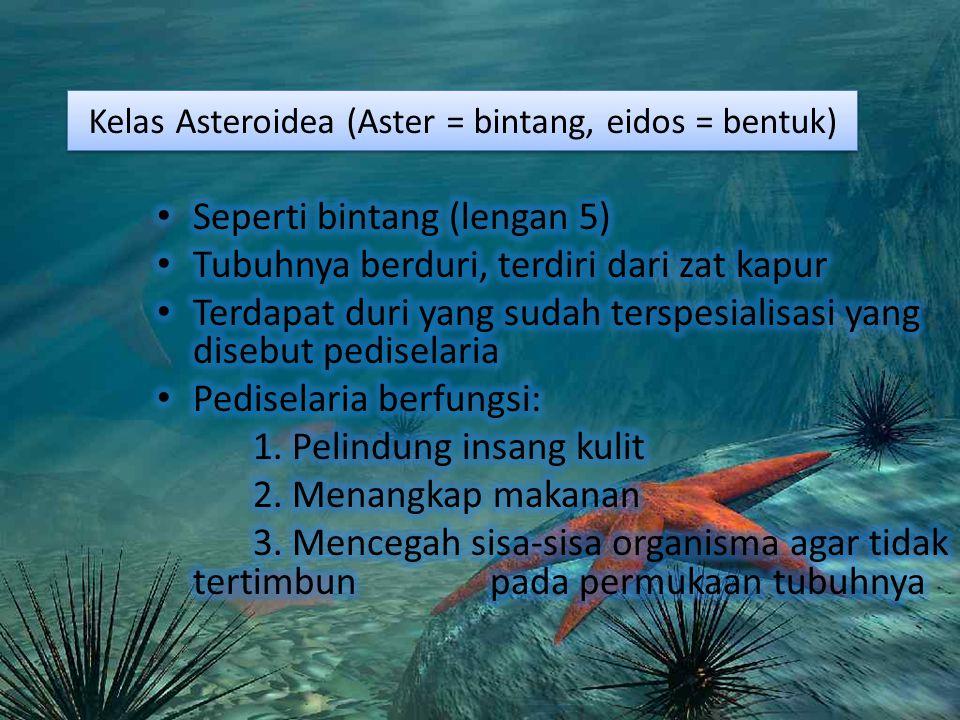 Kelas Asteroidea (Aster = bintang, eidos = bentuk)