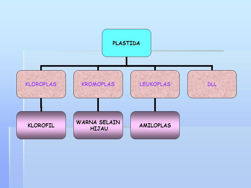 LISOSOM Lisosom merupakan organel sel bermembran yang hanya ditemukan pada sel hewan. Organel ini berisi enzim hidrolitik, misalnya lipase dan proteas
