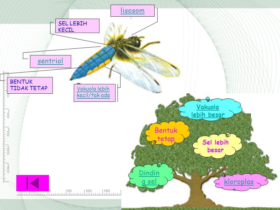 Tips: Pelajari lagi perbedaan organel sel hewan dan tumbuhan!! BACK