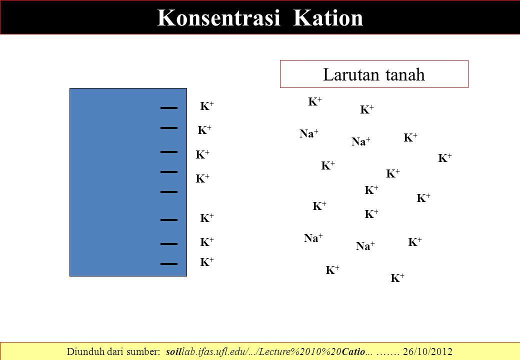 Konsentrasi Kation Na + K+K+ K+K+ K+K+ K+K+ K+K+ K+K+ K+K+ K+K+ K+K+ K+K+ K+K+ K+K+ K+K+ K+K+ K+K+ K+K+ K+K+ K+K+ K+K+ K+K+ Larutan tanah Diunduh dari