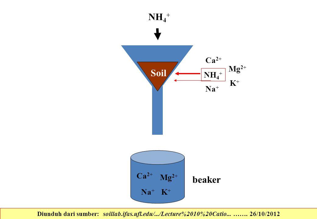 Soil NH 4 + K+K+ Ca 2+ Na + Mg 2+ K+K+ Ca 2+ Na + Mg 2+ beaker NH 4 + Diunduh dari sumber: soillab.ifas.ufl.edu/.../Lecture%2010%20Catio... ……. 26/10/