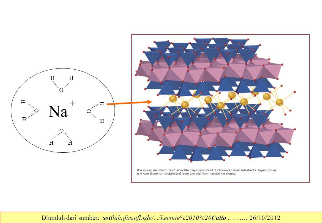 Na HH O HH O HH O HH O + Diunduh dari sumber: soillab.ifas.ufl.edu/.../Lecture%2010%20Catio... ……. 26/10/2012
