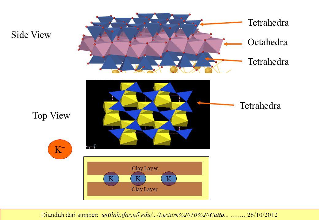 Side View Tetrahedra Octahedra Tetrahedra Top View Tetrahedra K+K+ K K K Clay Layer Diunduh dari sumber: soillab.ifas.ufl.edu/.../Lecture%2010%20Catio