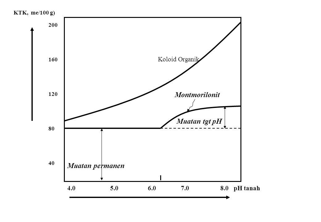 Koloid Organik Montmorilonit Muatan tgt pH Muatan permanen 4.0 5.0 6.0 7.0 8.0 pH tanah 200 160 120 80 40 KTK, me/100 g)