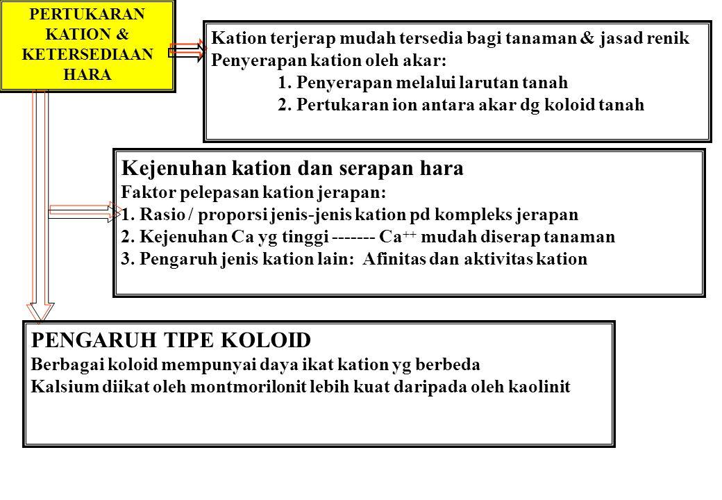 PERTUKARAN KATION & KETERSEDIAAN HARA Kejenuhan kation dan serapan hara Faktor pelepasan kation jerapan: 1. Rasio / proporsi jenis-jenis kation pd kom