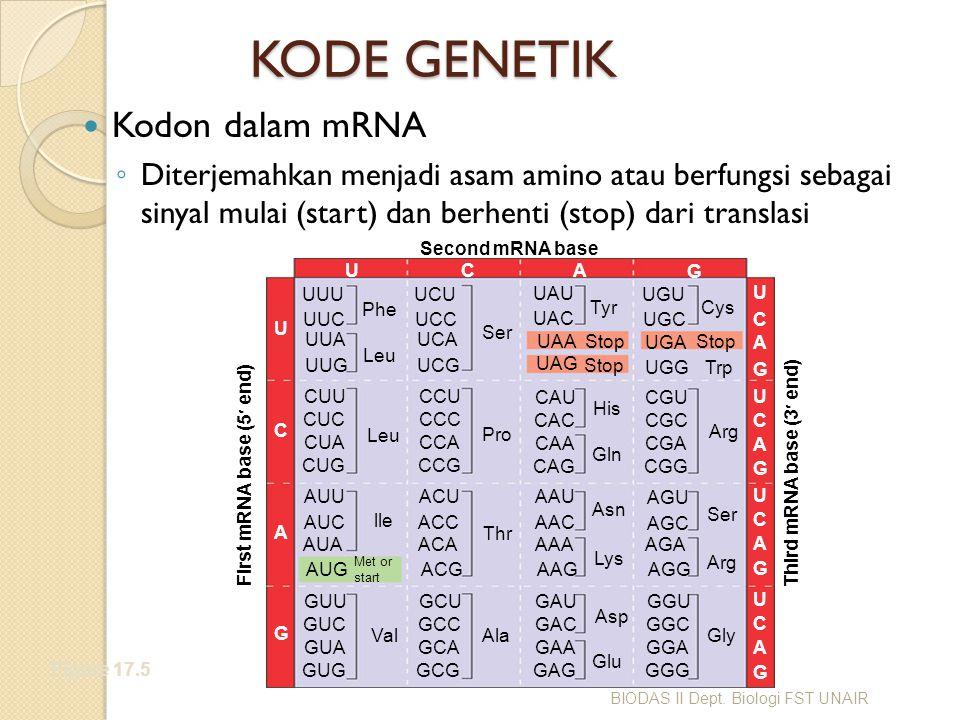 KODE GENETIK Kodon dalam mRNA ◦ Diterjemahkan menjadi asam amino atau berfungsi sebagai sinyal mulai (start) dan berhenti (stop) dari translasi Figure