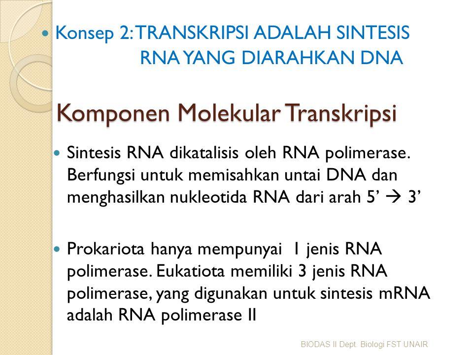 Komponen Molekular Transkripsi Sintesis RNA dikatalisis oleh RNA polimerase. Berfungsi untuk memisahkan untai DNA dan menghasilkan nukleotida RNA dari