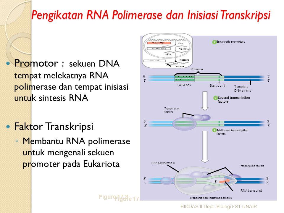 Pengikatan RNA Polimerase dan Inisiasi Transkripsi Promotor : sekuen DNA tempat melekatnya RNA polimerase dan tempat inisiasi untuk sintesis RNA Fakto