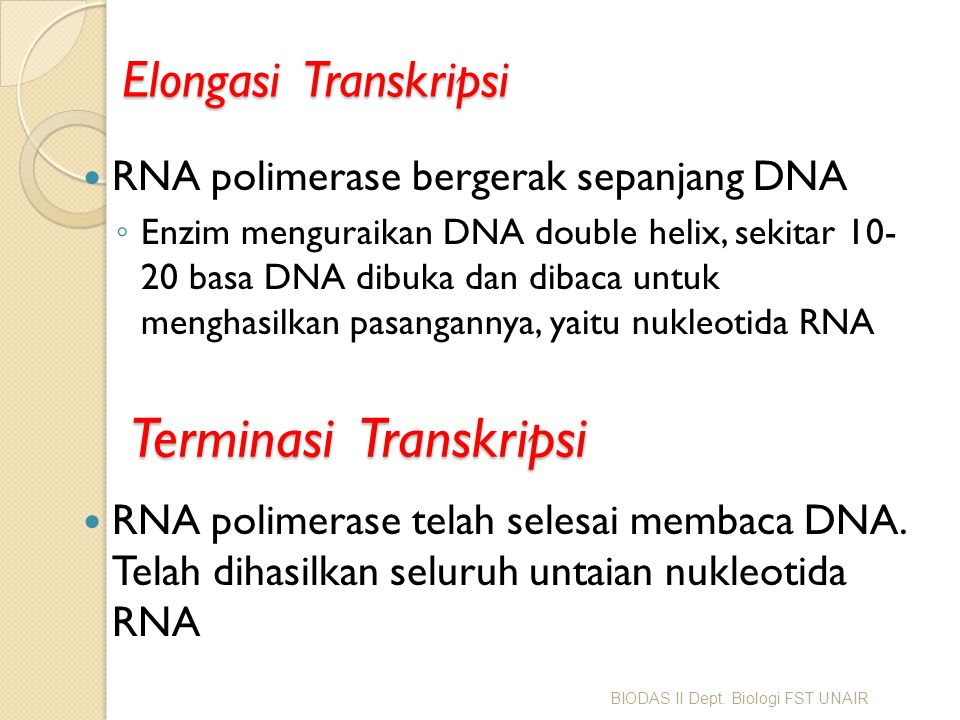 Elongasi Transkripsi RNA polimerase bergerak sepanjang DNA ◦ Enzim menguraikan DNA double helix, sekitar 10- 20 basa DNA dibuka dan dibaca untuk mengh