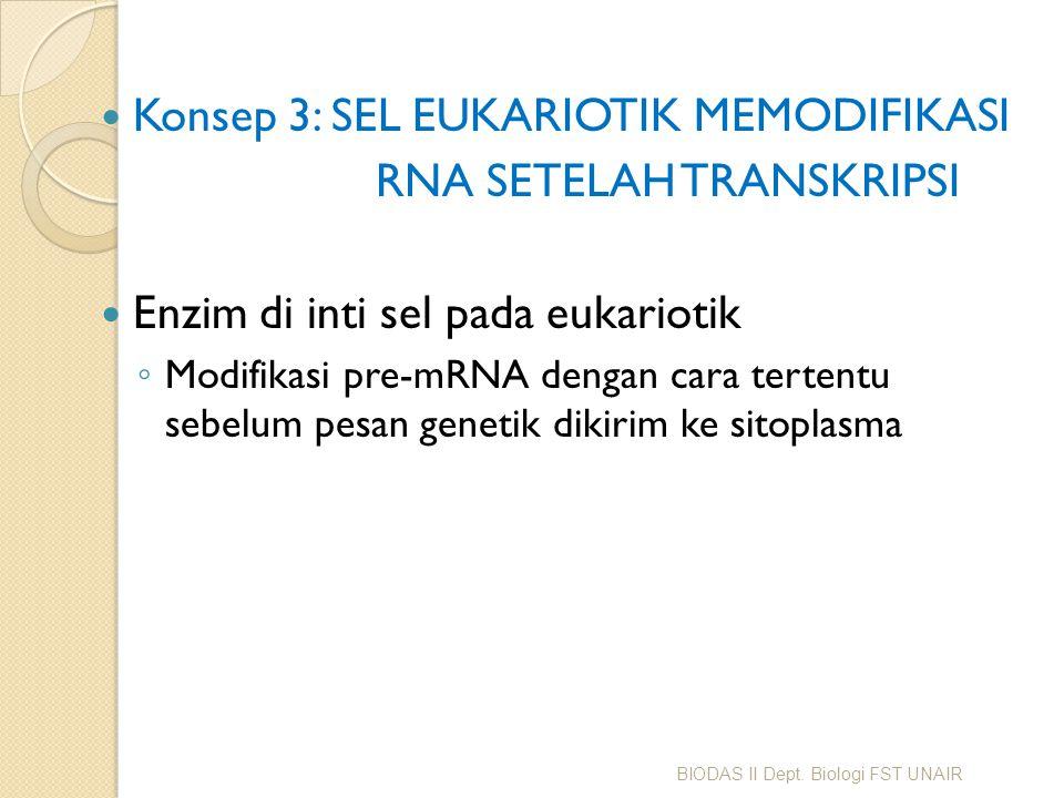 Konsep 3: SEL EUKARIOTIK MEMODIFIKASI RNA SETELAH TRANSKRIPSI Enzim di inti sel pada eukariotik ◦ Modifikasi pre-mRNA dengan cara tertentu sebelum pes