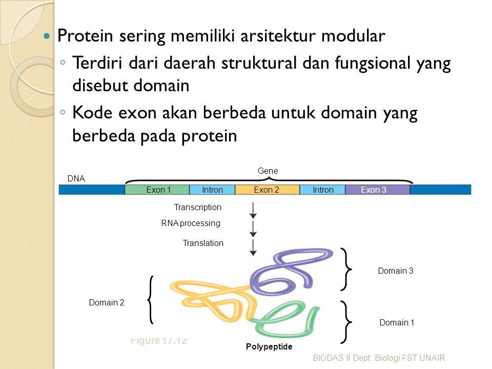 Protein sering memiliki arsitektur modular ◦ Terdiri dari daerah struktural dan fungsional yang disebut domain ◦ Kode exon akan berbeda untuk domain y
