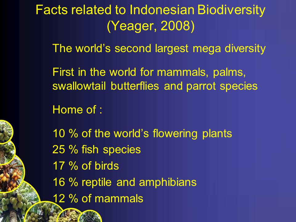 The highest coral species richness