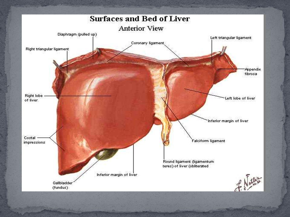 1.Metabolisme karbohidrat pembentukan perubahan dan pemecahan karbohidrat, lemak dan protein.