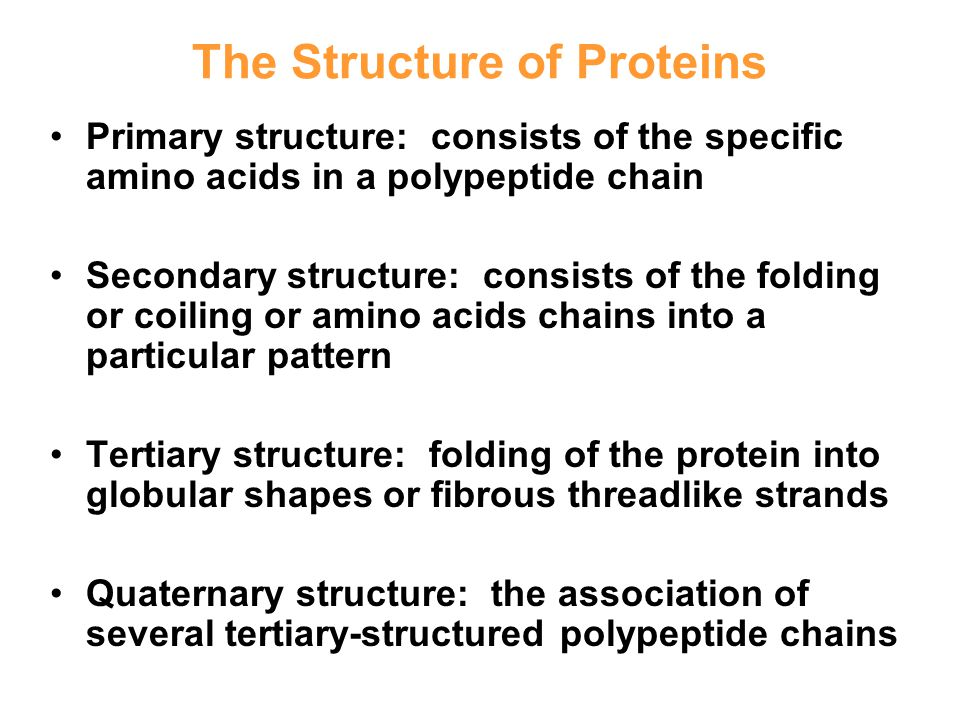 The Structure of Proteins Primary structure: consists of the specific amino acids in a polypeptide chain Secondary structure: consists of the folding or coiling or amino acids chains into a particular pattern Tertiary structure: folding of the protein into globular shapes or fibrous threadlike strands Quaternary structure: the association of several tertiary-structured polypeptide chains