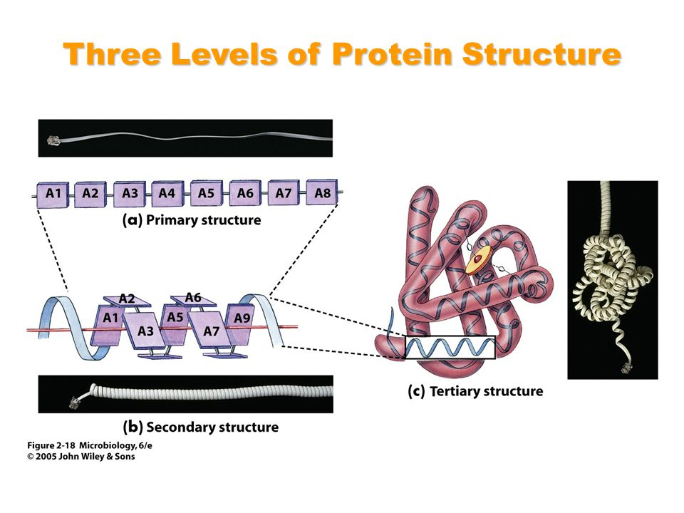 Three Levels of Protein Structure