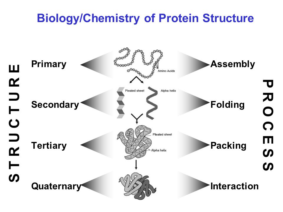 Protein denaturation kinetics and glass transition conditions are predicted...