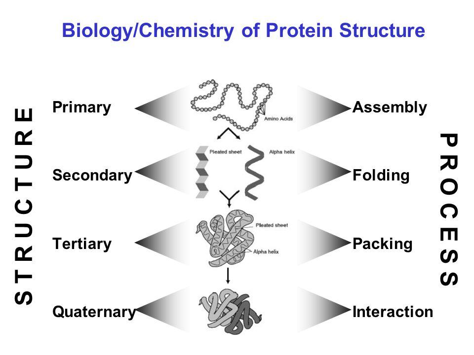 Protein Denaturation