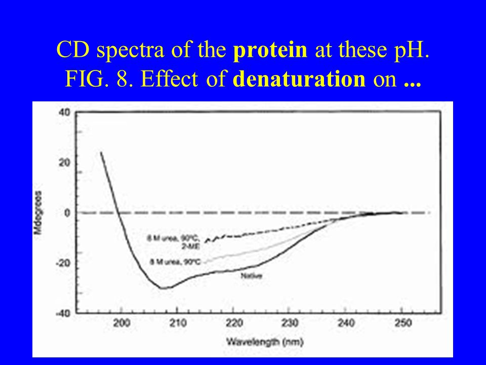CD spectra of the protein at these pH. FIG. 8. Effect of denaturation on...
