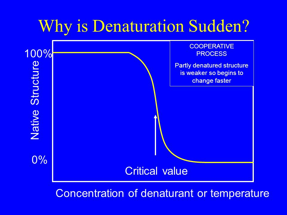 Why is Denaturation Sudden.