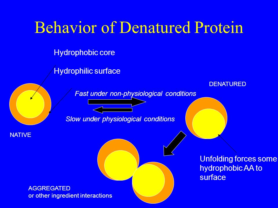 Behavior of Denatured Protein Hydrophobic core Hydrophilic surface NATIVE AGGREGATED or other ingredient interactions DENATURED Unfolding forces some hydrophobic AA to surface Fast under non-physiological conditions Slow under physiological conditions