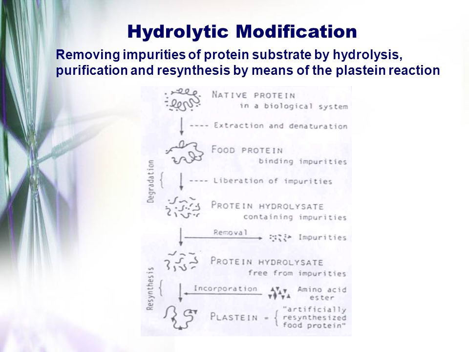 Hydrolytic Modification Removing impurities of protein substrate by hydrolysis, purification and resynthesis by means of the plastein reaction