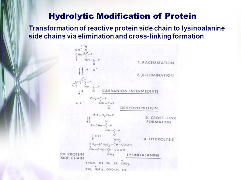 Hydrolytic Modification of Protein Transformation of reactive protein side chain to lysinoalanine side chains via elimination and cross-linking format
