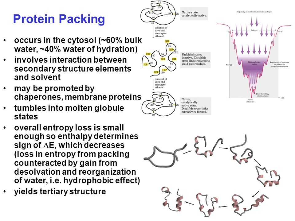 Secondary Structure non-linear 3 dimensional localized to regions of an amino acid chain formed and stabilized by hydrogen bonding, electrostatic and van der Waals interactions