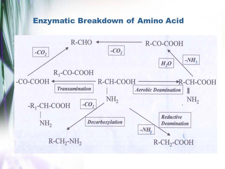 Enzymatic Breakdown of Amino Acid