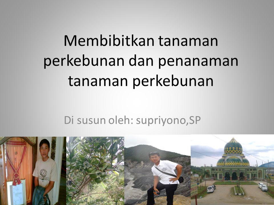 Membibitkan tanaman perkebunan dan penanaman tanaman perkebunan Di susun oleh: supriyono,SP