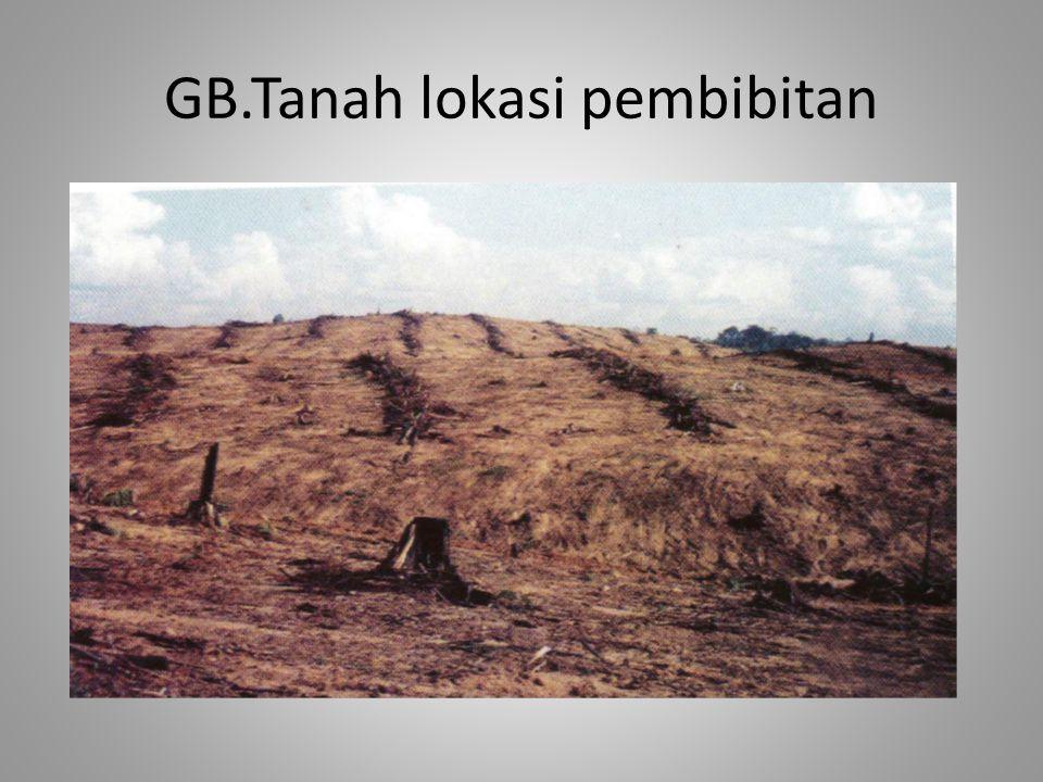 GB.Tanah lokasi pembibitan