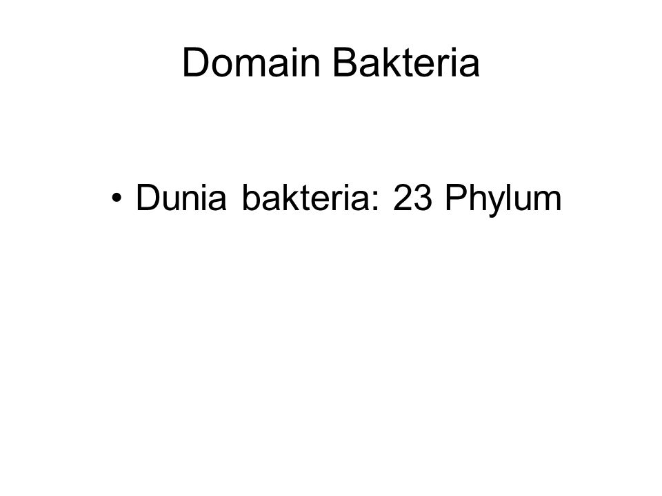 Domain Bakteria Dunia bakteria: 23 Phylum