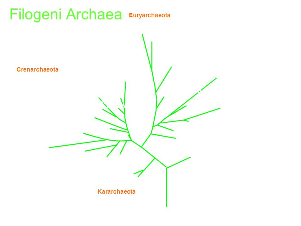 Filogeni Archaea Archaeoglobus Methanococcus vannielii Desulfurococcus Sulfolobus pJP 96 85/74 pSL 12 pSL17 pSL22 pSL4 Marine SBAR5 pJP 27 pJP 78 Ther
